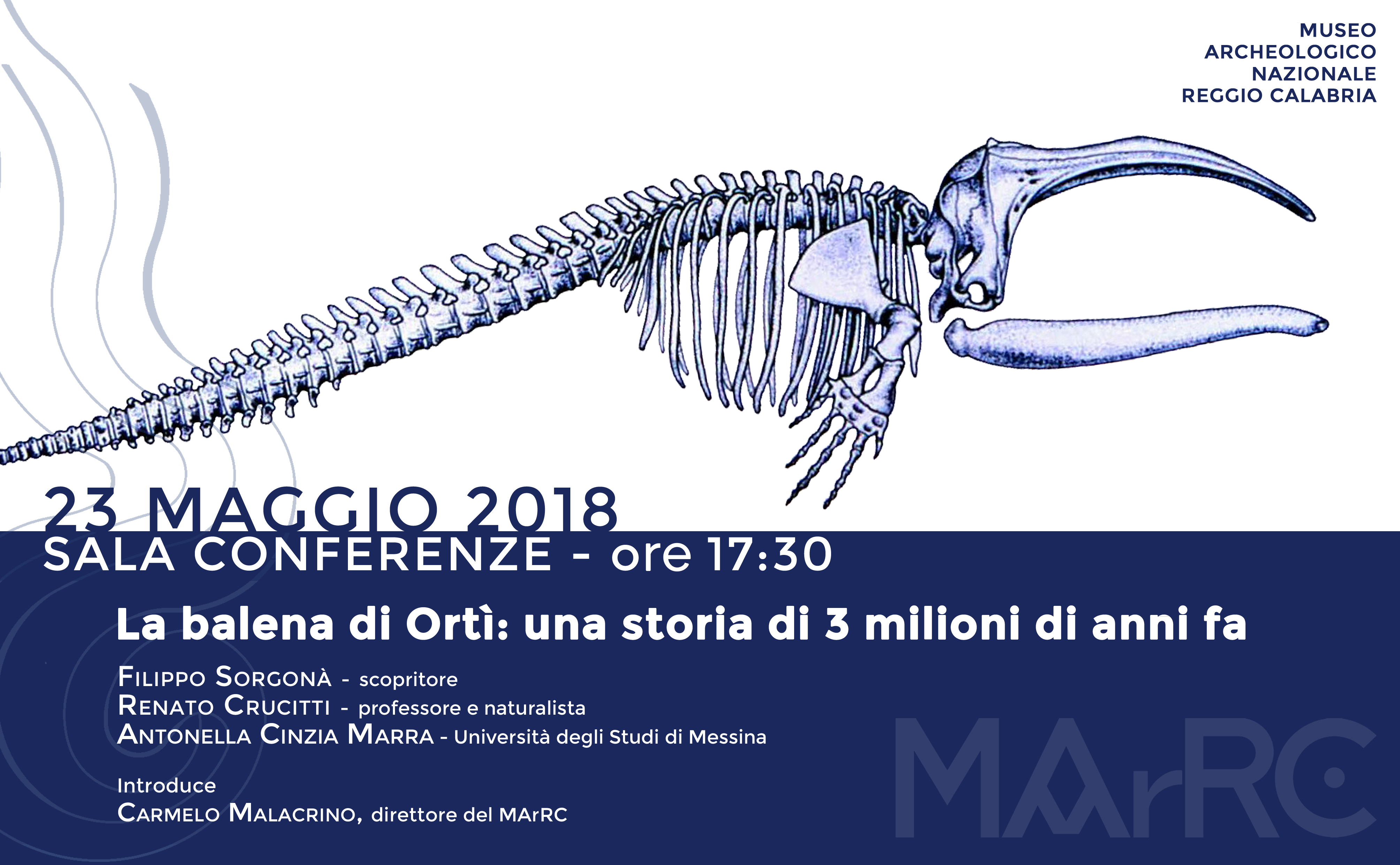 The fossil whale form Ortì